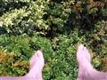 Feet above..
