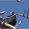 CR vultures_9