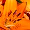 AsianLily#