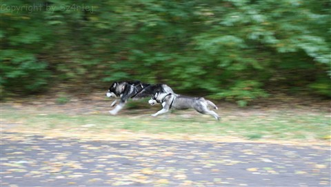 Doggies (1 of 1)