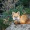 Foxy_0448