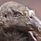 Condor headshot
