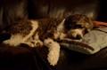 Kala-sleeping