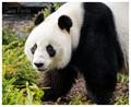 Damp Panda