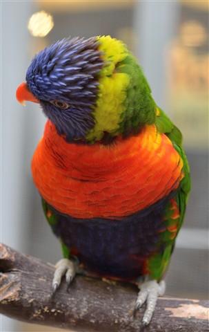 Aviary 1