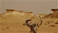 Zekreet Desert