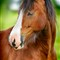 horse_dpreview