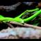 Green Whip Snake