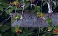 Finnies Garden