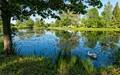 The Still Pond