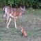 Deer&Fox5x7