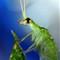 tree fly