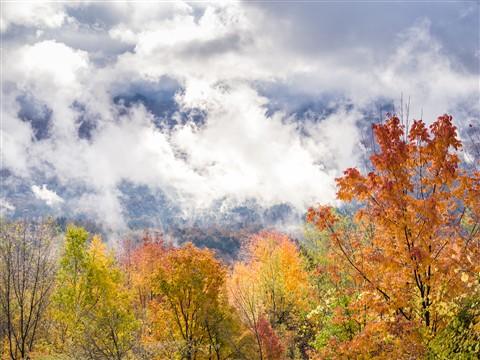 Autumn-Foliage-4