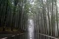 ..rainy road..
