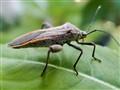 Macro Bug 2