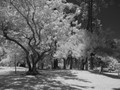Our local city park in IR