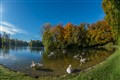 Swans at Lake in Southern Germany