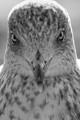 Seagull Zandvoort