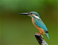 A Kingfisher Is My Diamond