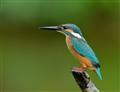 A Kingfisher Is My Diamond
