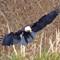 IMG_6431_eagle-3