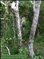 Path through the undergrowth