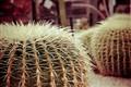 Cactus Cushions