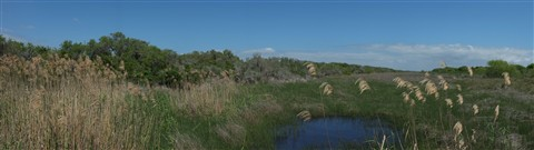Mosquito Marshes 2