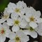 Flora White new settings