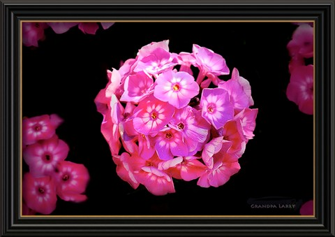 Flowers framed