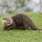 Knowsley Safari Park 20120505 0266