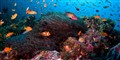 Reef Paradise