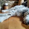 Song, the English setter: Shot with the 13mm eqv ultra wide of my mobile phone,