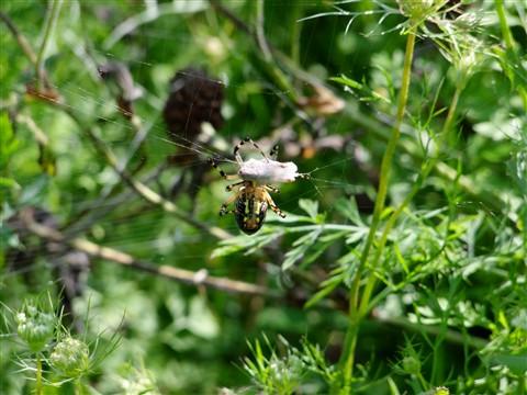 bugs 085