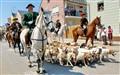 Jagdhunde und Pferde