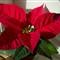 DSCN0137_flower_uc