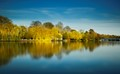 Thames Willows