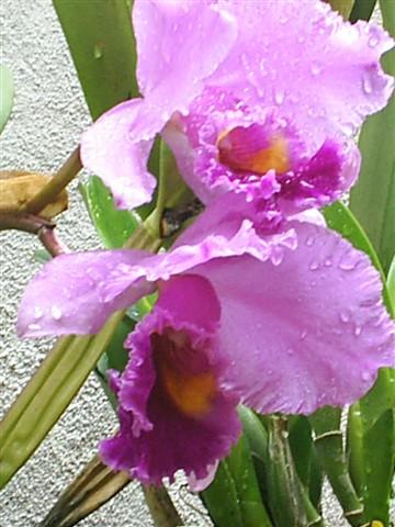 flores 2 009