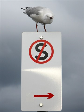 Gull cant read