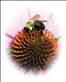 Bee Curls on Flower