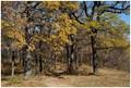 Late Fall in an Oak Forest