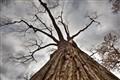 Tree Up