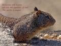 Squirrels of War