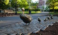 Boston Duck