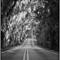 PTFPhoto_7-30-17__D608215_acros
