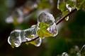 Ivy & Ice