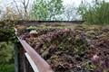 Roofgarden en Auvergne-4531-2