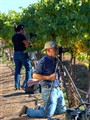 Vineyard Photographer