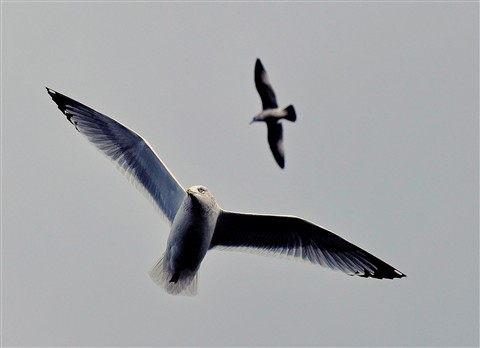 Gulls.._edited-3