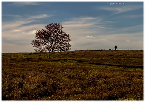 Walking the dog near a lone tree